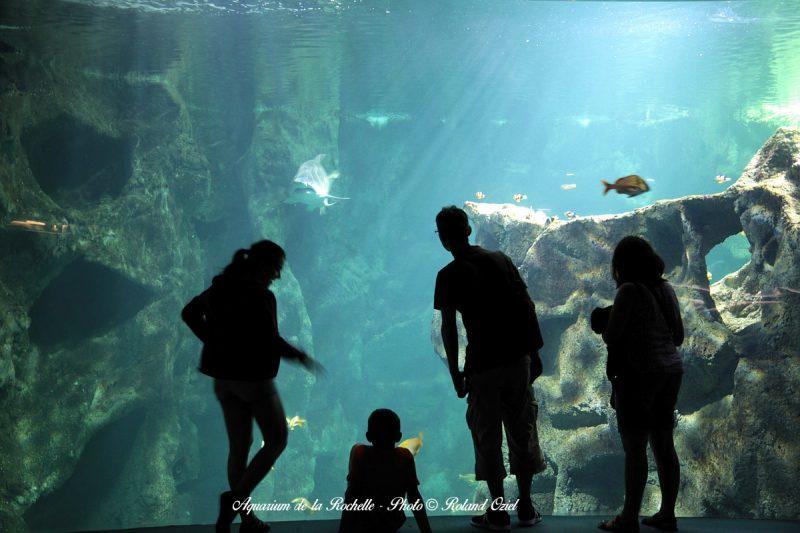 Gite proche de l'Aquarium de la Rochelle